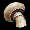der Pilz - grzyb